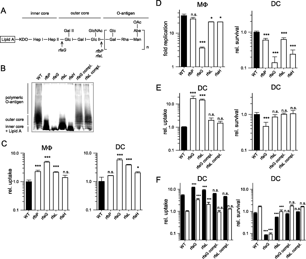 Role Of Salmonella Enterica Lipopolysaccharide In Activation Of Dendritic Cell Functions And
