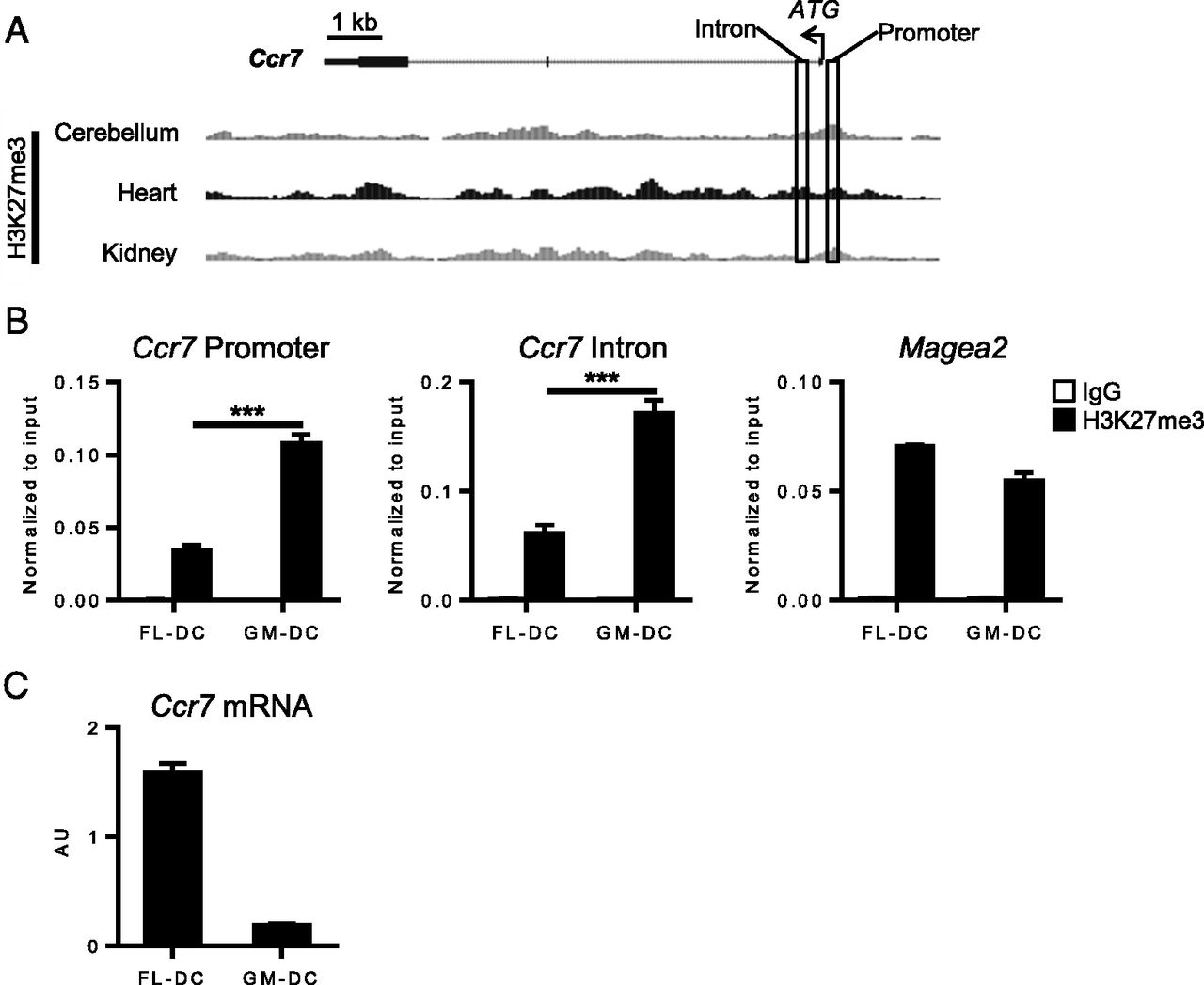 Epigenetic Control Of Ccr7 Expression In Distinct Lineages