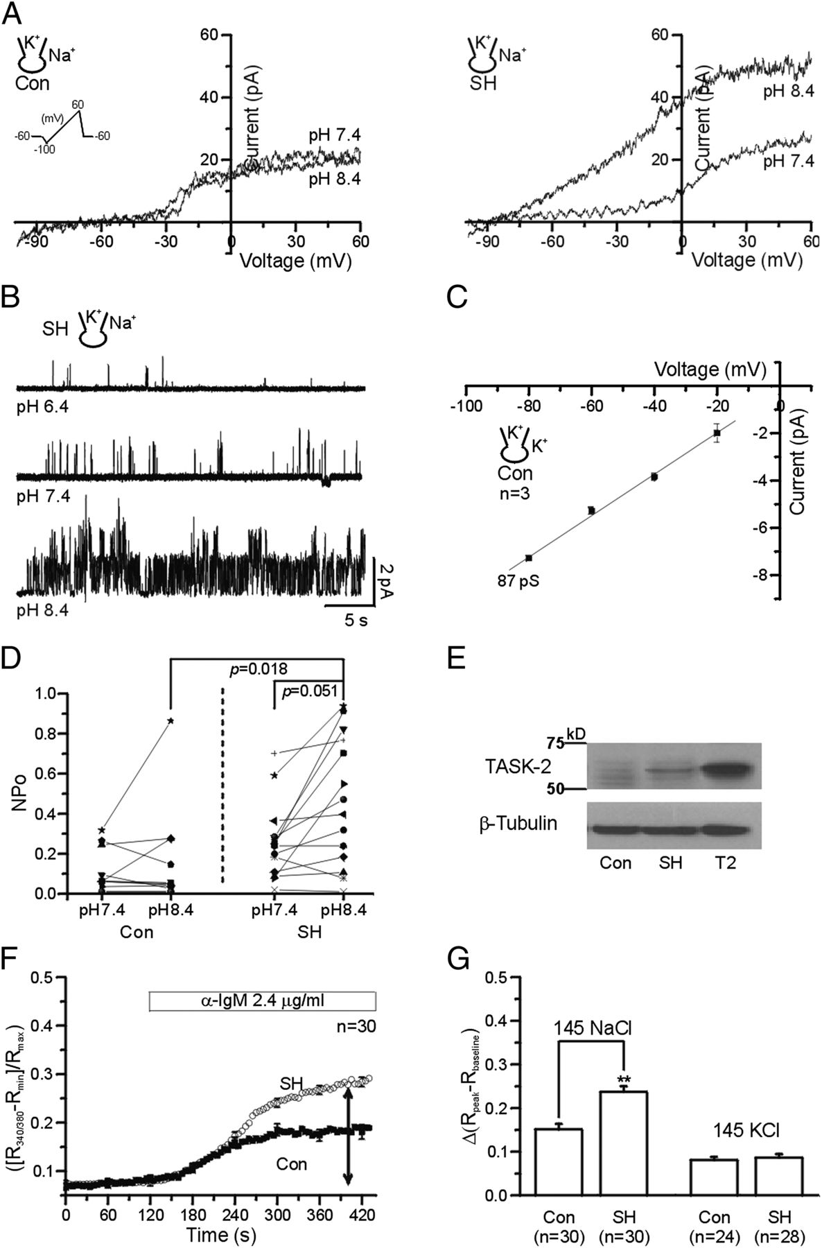 Hif 1 Mediated Upregulation Of Task 2 K Channels Augments Ca2 Signaling In Mouse B Cells