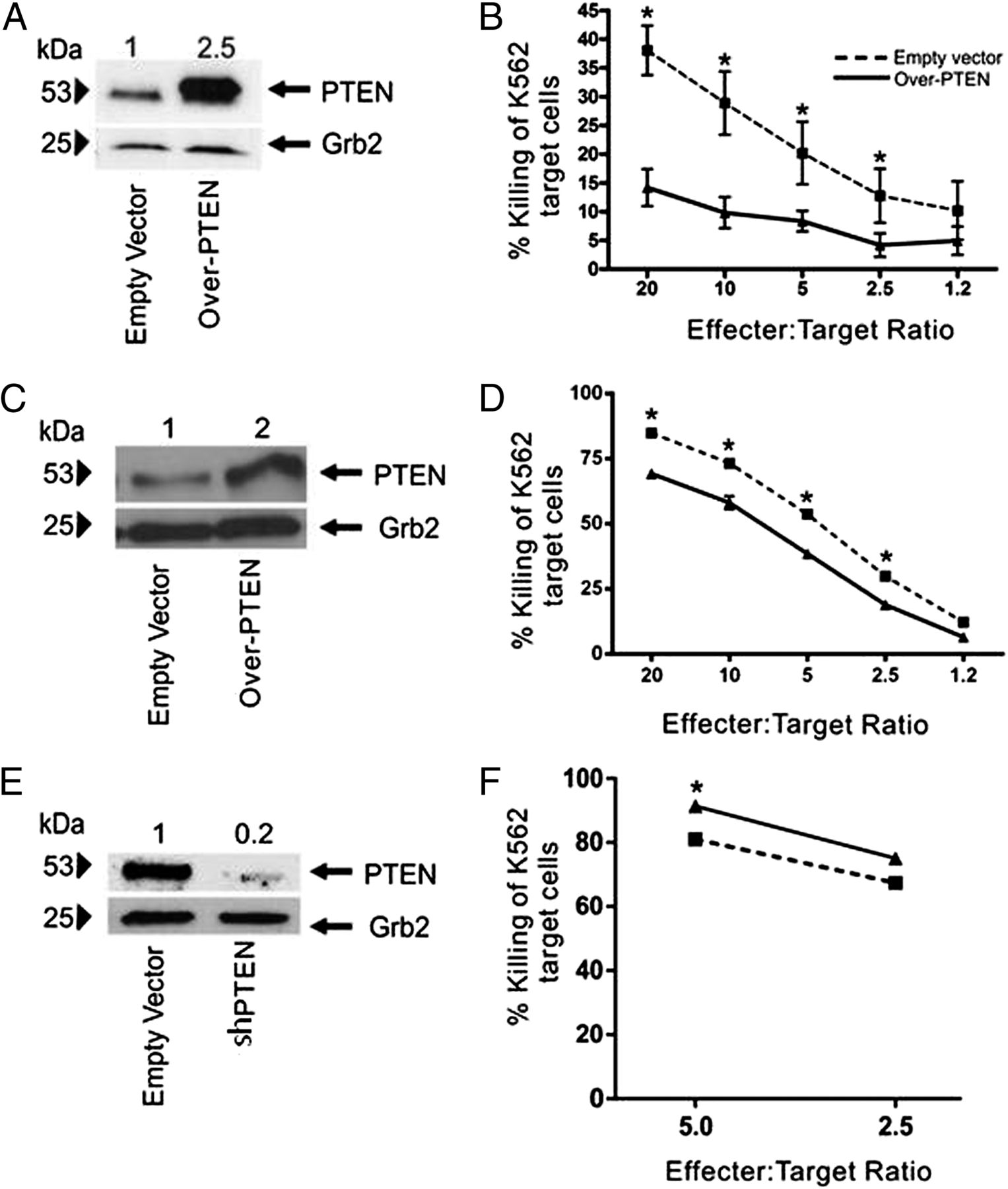 Pten Is A Negative Regulator Of Nk Cell Cytolytic Function