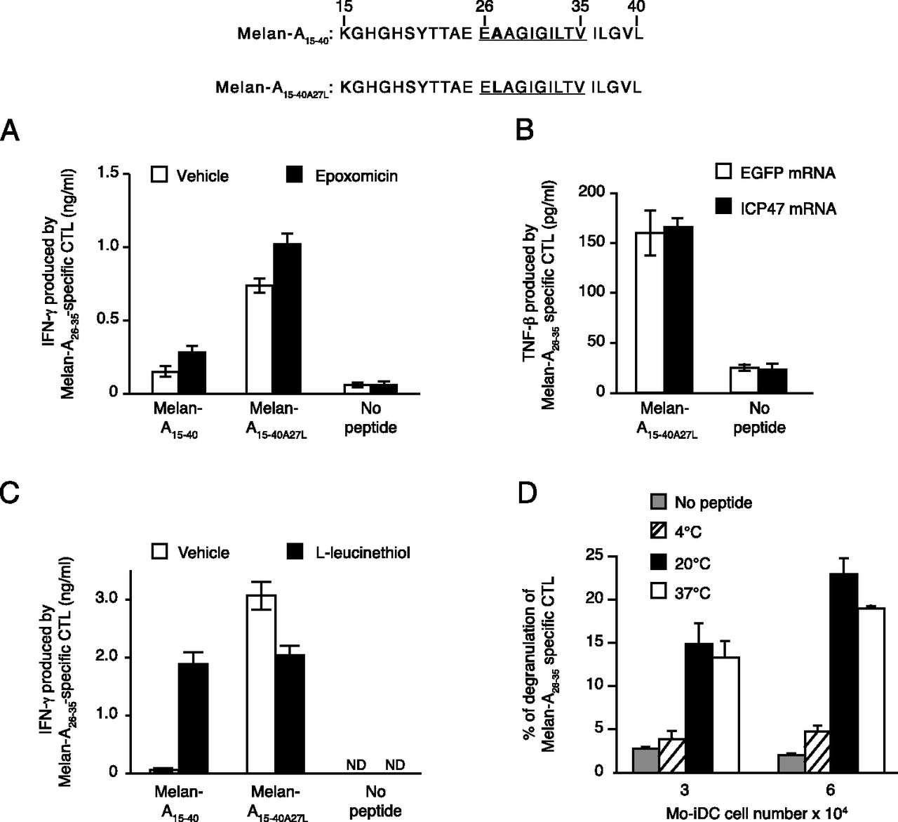 Long Peptide Cross Presentation By Human Dendritic Cells Occurs In Vacuoles By Peptide Exchange