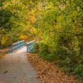 Nature Photography - Autumn in Bella Vista