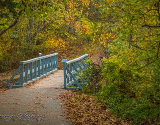 IMG_6460 Nature Photography Nature Photography – Autumn in Bella Vista IMG 6460