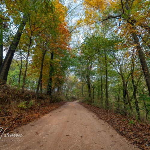 Autumn Dirt Road