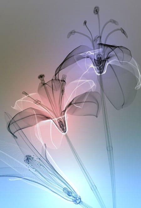 murayama-flora-02