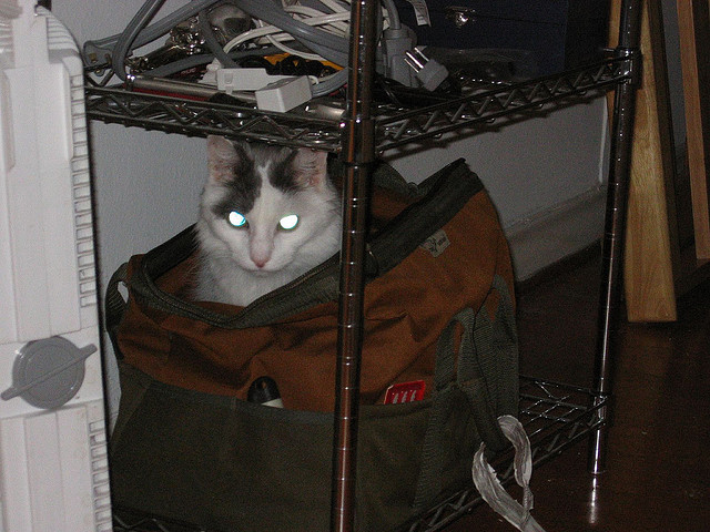 secret tool bag hiding spot with lazer eyes
