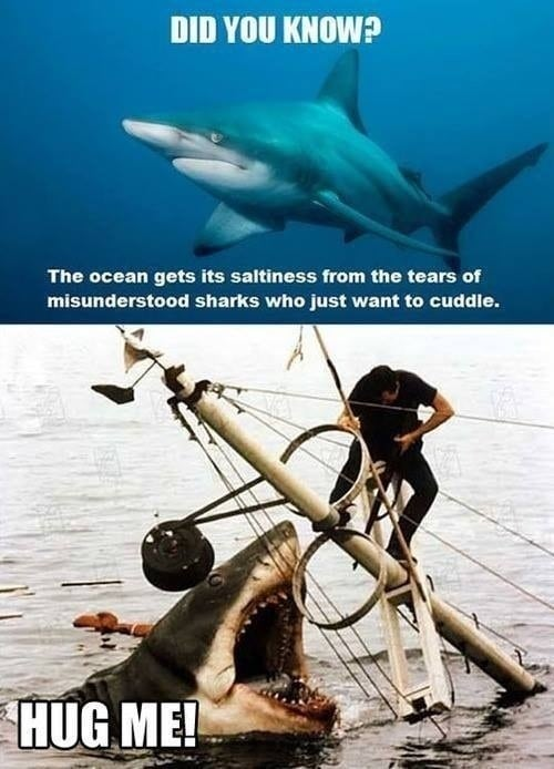 sharks-want-to-cuddle