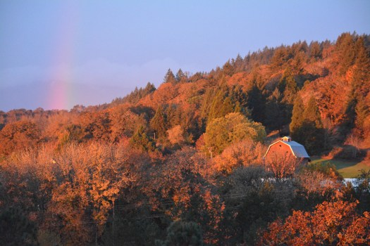 Barn with Rainbow in Fall Leaves