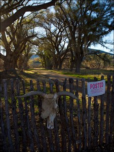 Cow skull and posted sign on a fence gate.