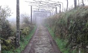 Camino Portugues při cestě z Rubiaes směrem do Porta v mlze