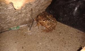 Žába ve španělských horách v regionu Almería