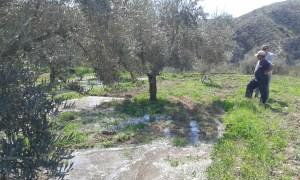 Zavlažování ala Andalusie.