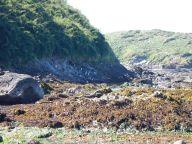 Kolonie hnízdících tučňáků Humboldtových u Cocotue na Chiloé v Chile