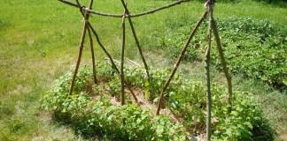 Popínavé fazole, dřevěná konstrukce, permakulturní zahrada