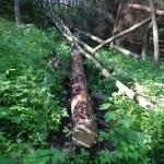 Domácí výroba, rozřezání stromu na stavební řezivo, cesta dřeva, prodejní stánek, výroba, domácí zpracování dřeva