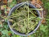 Repelentní rostlina, výluh z bylin, proti škůdcům, permakulturní zahrada, bez chemie.