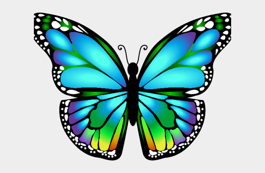 Bug Clipart Butterfly Butterfly Art Clip Png Cliparts Cartoons Jing Fm