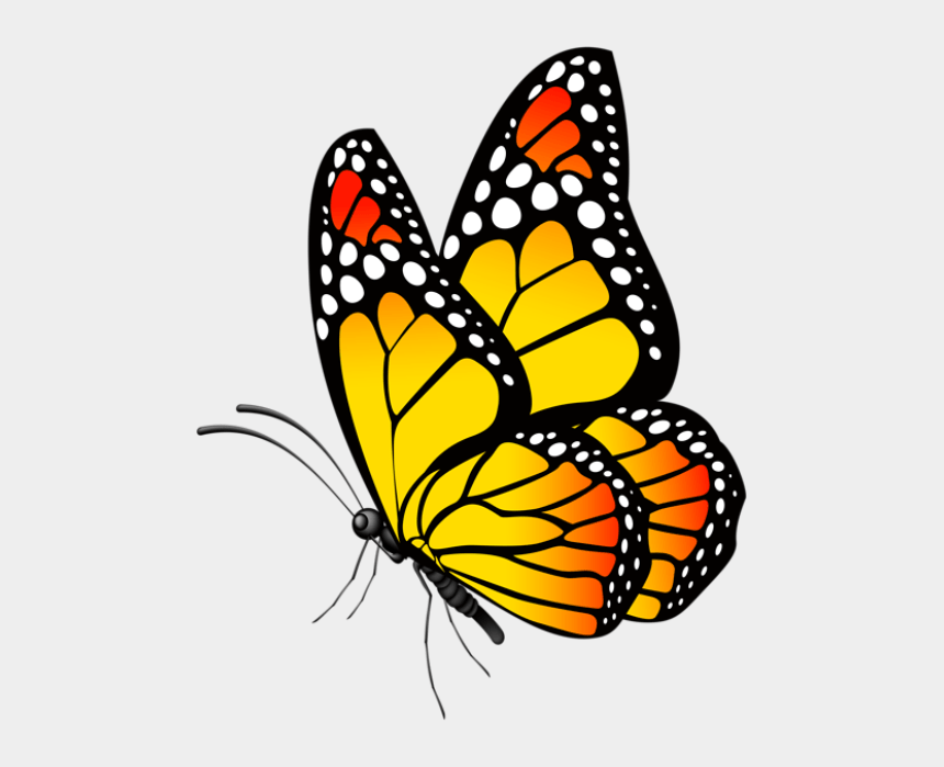 Butterfly Clip Art Butterfly Drawing Butterfly Painting Butterfly Images Hd Png Cliparts Cartoons Jing Fm