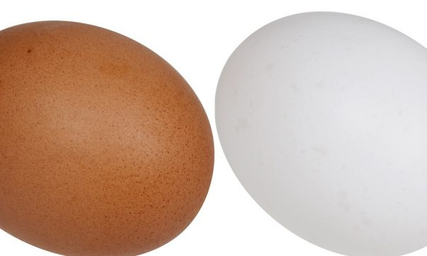 White or Brown Egg Which Is Better To Buy?