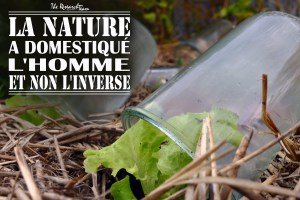 Permaculture : bocal-serre