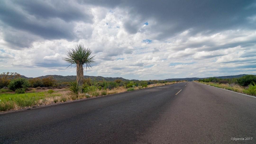 Yucca schidigera en la carretera