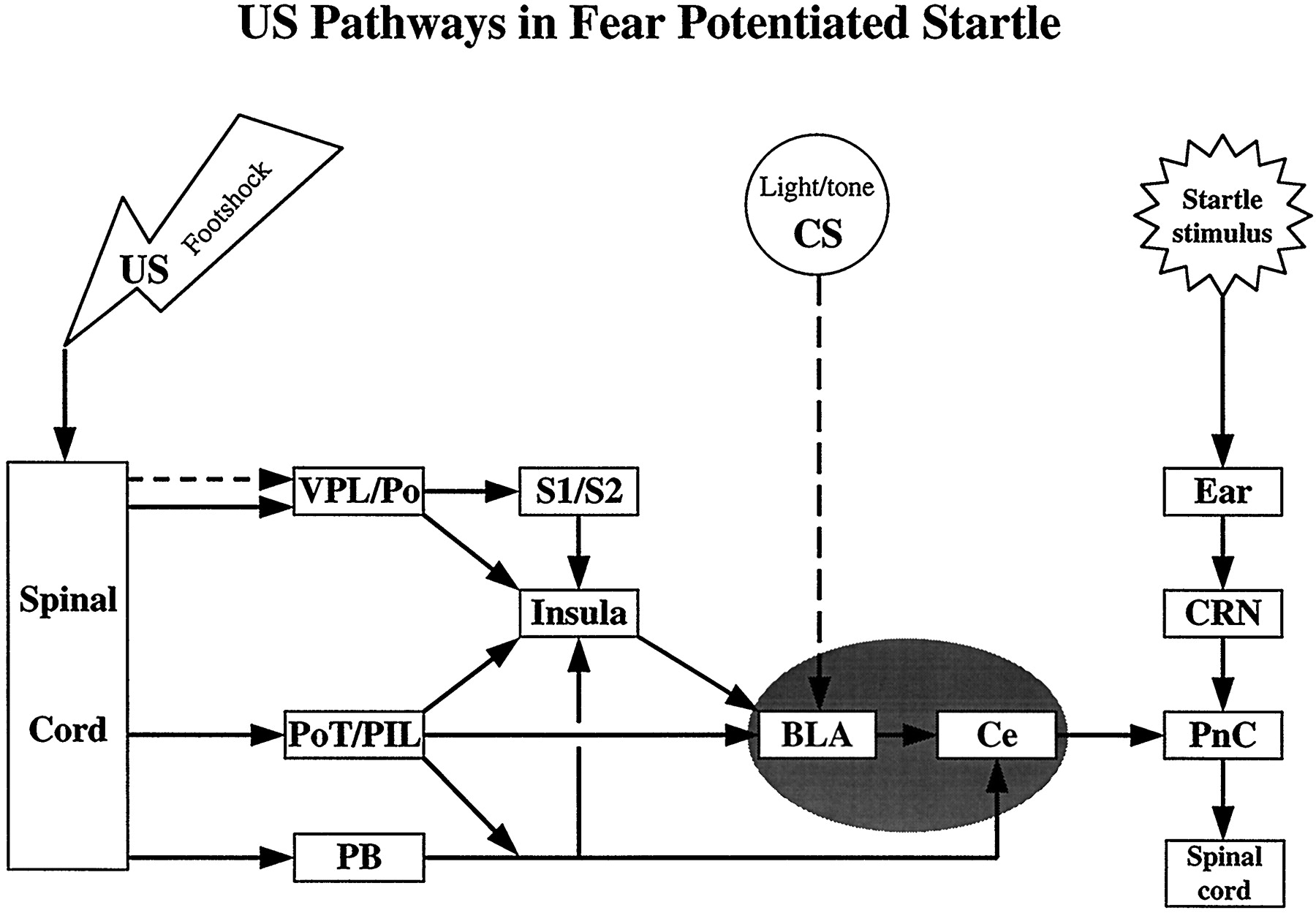 Pain Pathways Involved In Fear Conditioning Measured With