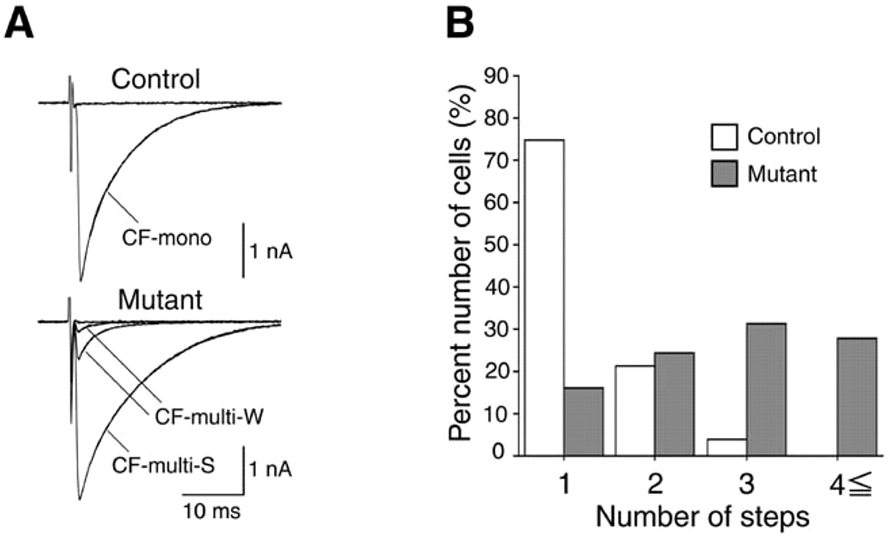 P Q Type Ca2 Channel 1a Regulates Synaptic Competition