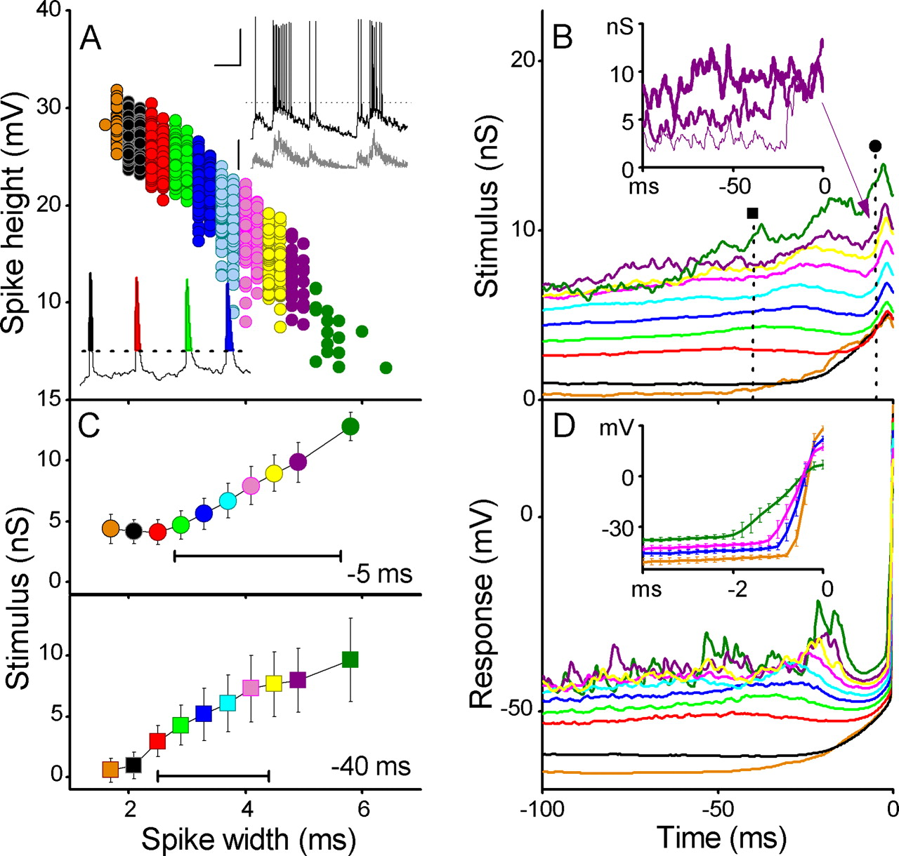 Stimulus History Reliably Shapes Action Potential Waveforms Of Cortical Neurons