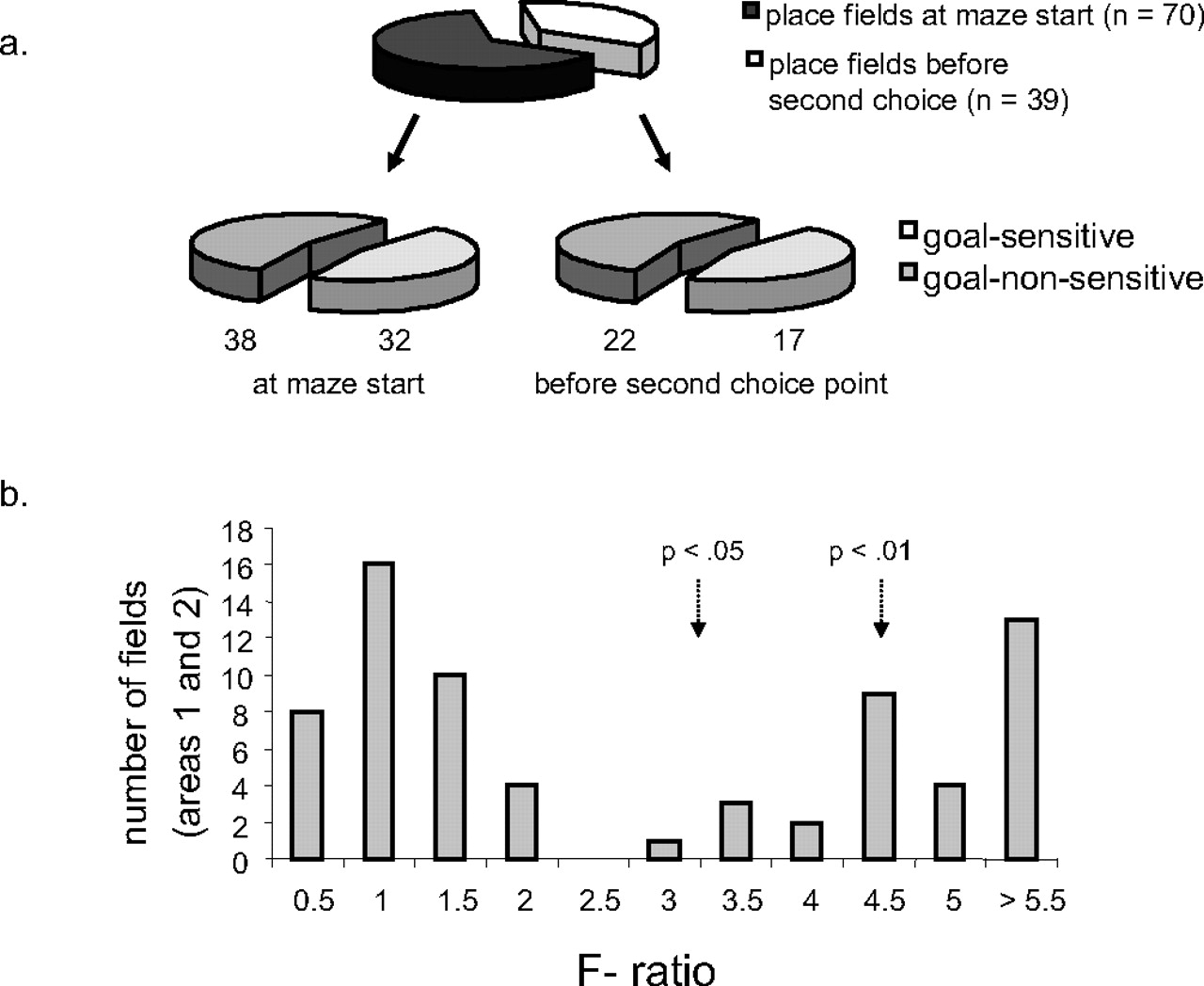 Hippocampal Ca1 Place Cells Encode Intended Destination On A Maze With Multiple Choice Points