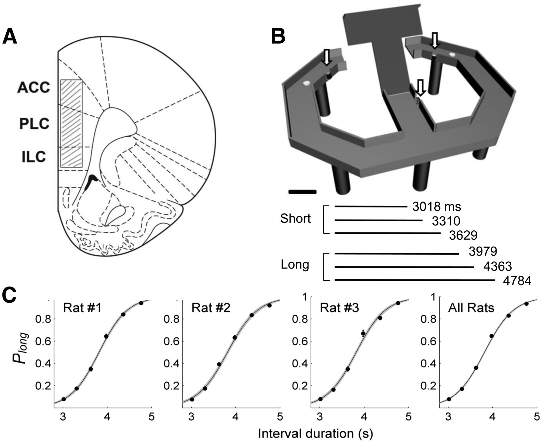Neural Correlates Of Interval Timing In Rodent Prefrontal