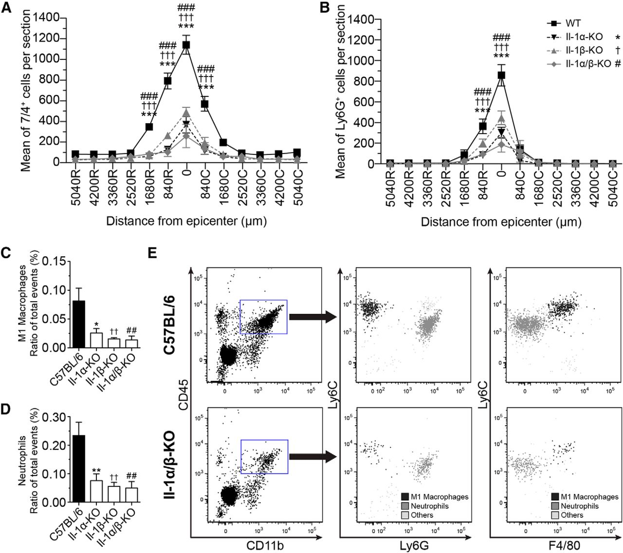 Il 1 Gene Deletion Protects Oligodendrocytes After Spinal