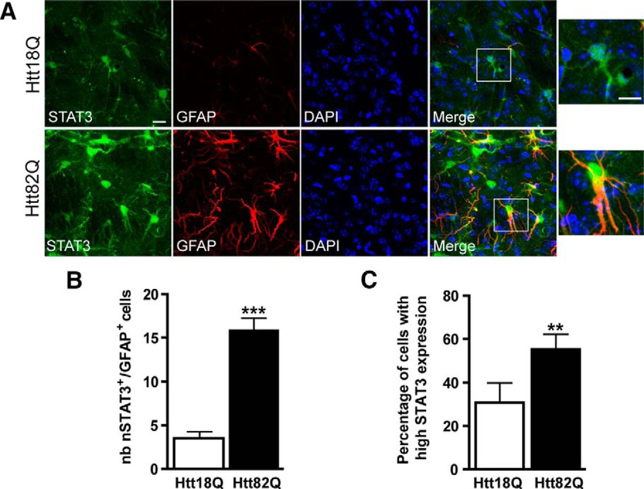 The Jak Stat3 Pathway Is A Common Inducer Of Astrocyte Reactivity In Alzheimer S And Huntington