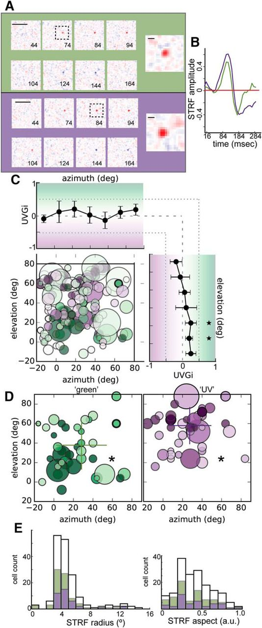 Spatial Organization of Chromatic Pathways in the Mouse ...