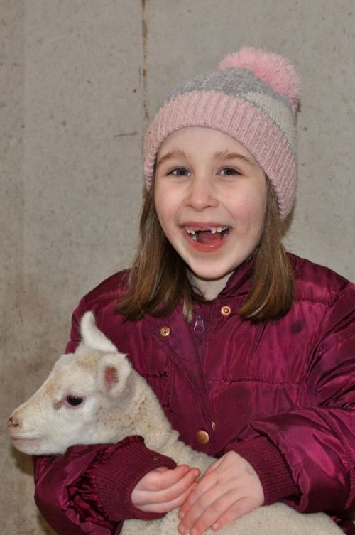 Lambing Live at Birchfield Farm