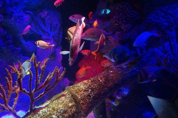 Sea Life Aquarium on I-drive 360