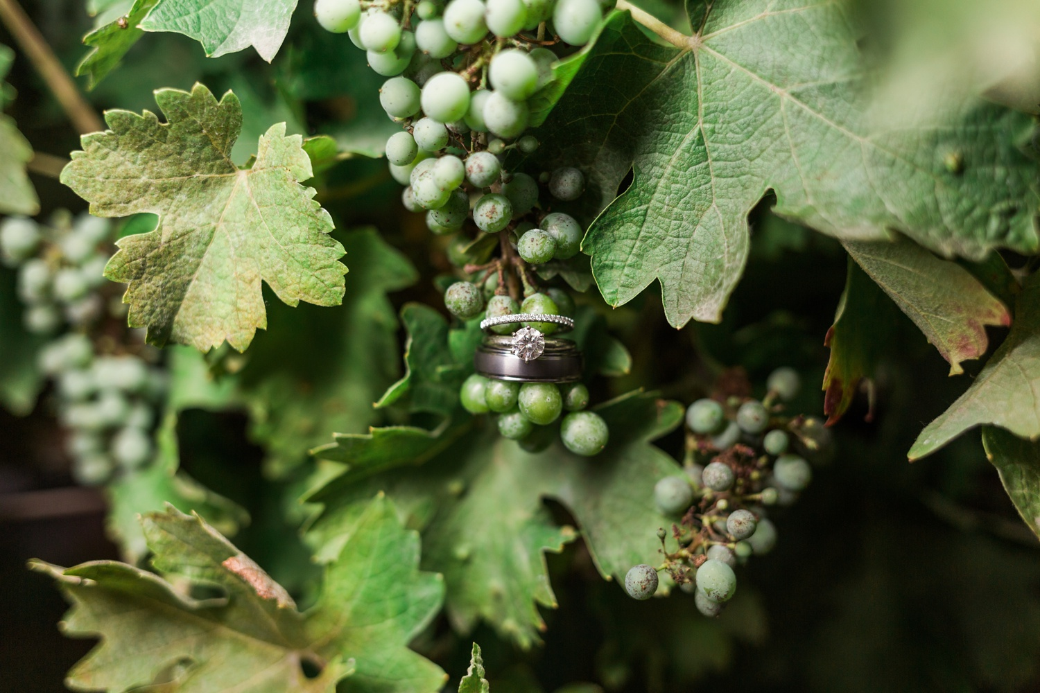 A photo of wedding rings in a vineyard at Chateau Lill in Woodinville, a wedding venue near Seattle, WA. | Joanna Monger Photography | Seattle & Snohomish Photographer