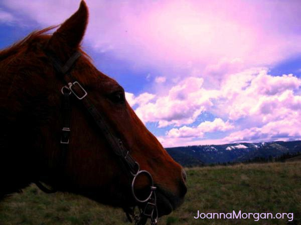 Enjoy the Ride of Your Life by Joanna Morgan 3-4-13