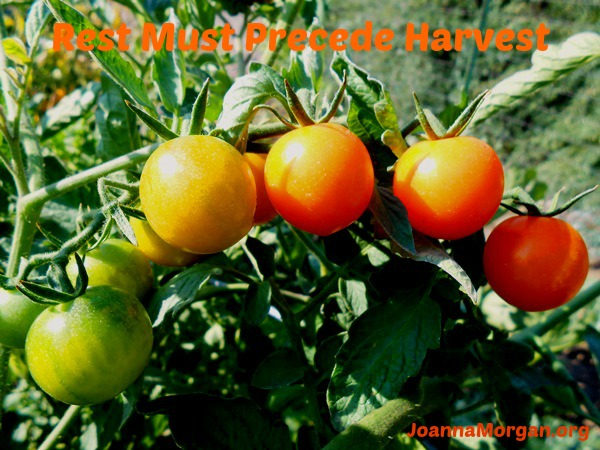 Rest Must Precede Harvest by Joanna Morgan 7-12-13 Blog