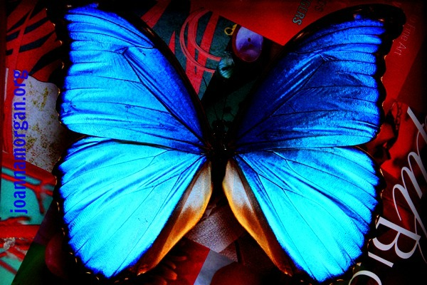 Blue Butterfly by Joanna Morgan 8-4-13 Pinterested