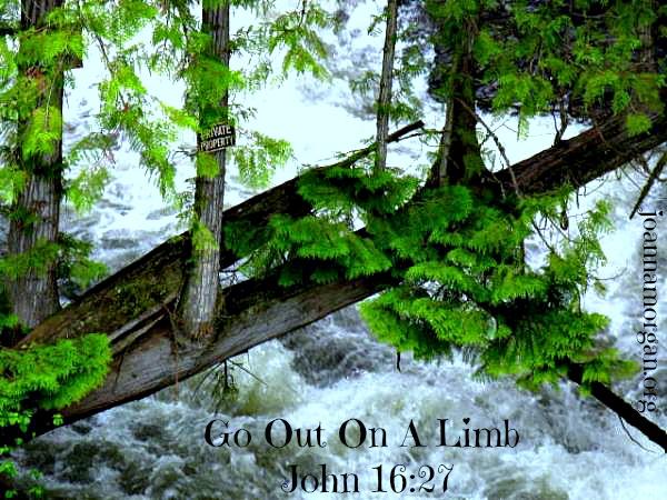 Go Out On A Limb by Joanna Morgan 11-19-13 Blog