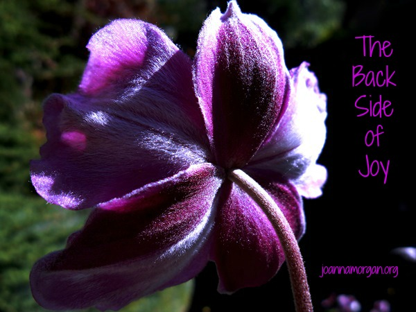 The Back Side of Joy by Joanna Morgan 1-29-14