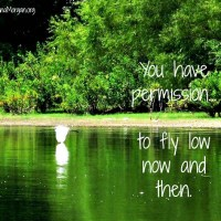 Permission to Fly Low