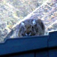 The Rabbit On The Roof