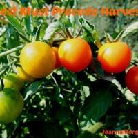 Rest Must Precede Harvest