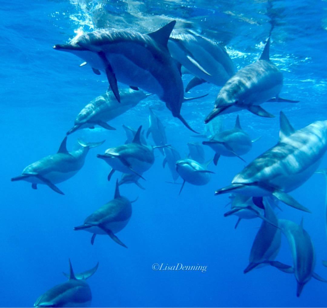 Dolphin Collective Noun