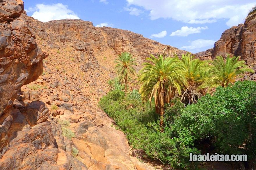 Oásis de Adad na região de Ouarzazate