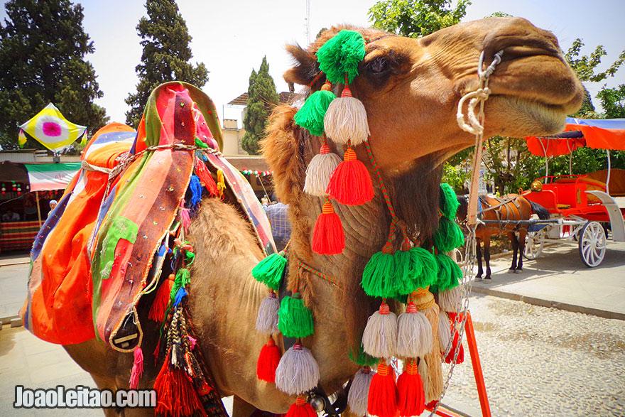 Centro da cidade de Shiraz