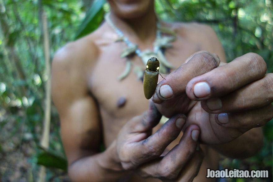 Vaga-lume na selva