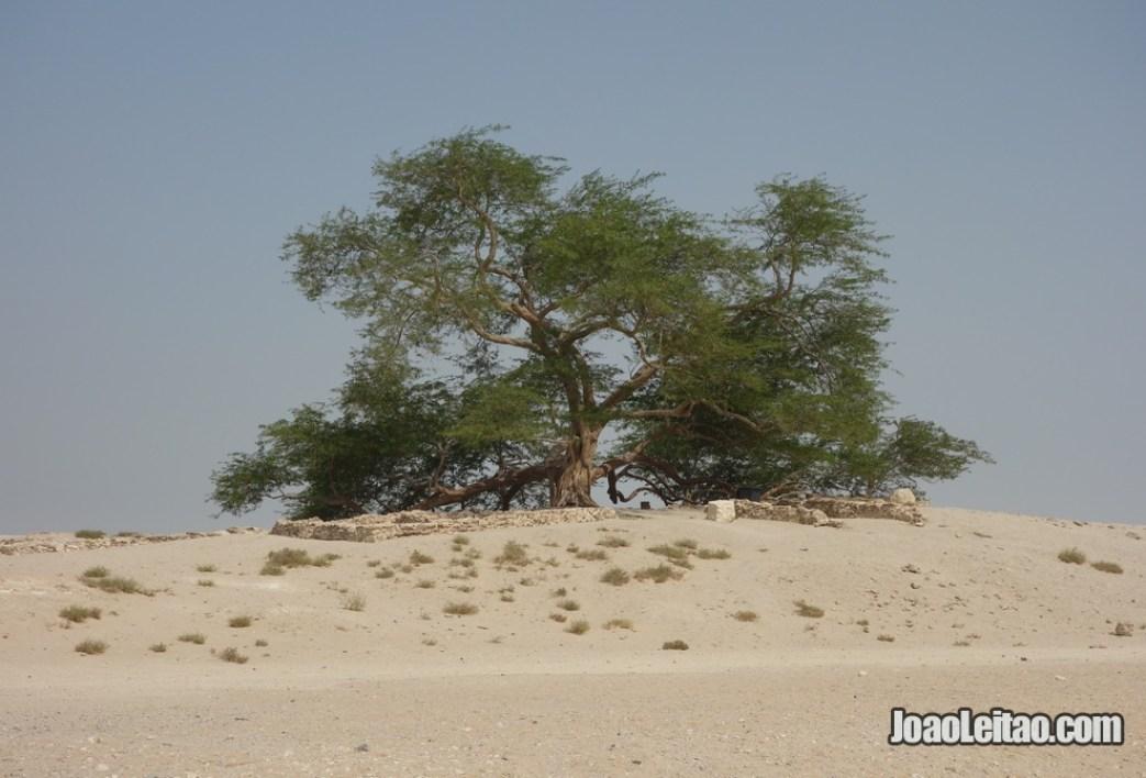 A famosa Árvore de Vida no deserto de Barém