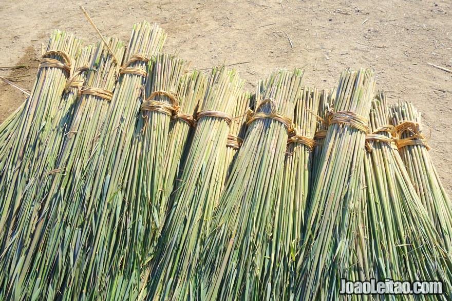 The wetlands harvested reeds